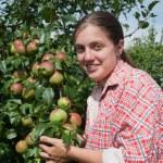 Girl picking apples — Stock Photo