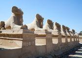 Ram-headed sphinxes at Karnak temple — Stock Photo