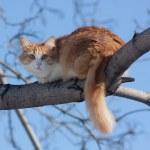 Cat on a tree — Stock Photo #2178157
