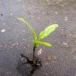 Royalty-Free Stock Photo: Growing green sprout in asphalt