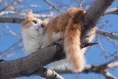 Cat on tree — Foto de Stock
