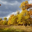 Autumn trees of golden colour — Stock Photo