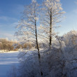 The frozen tree near to the snow-covered — Stock Photo #1275290