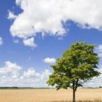 Постер, плакат: Lonely tree