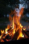 Raging inferno — Stock Photo