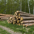 Pine logs — Stock Photo