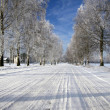 Winter road — Stock Photo #1646330