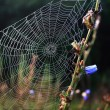 A spider web - Stock Photo