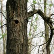 Bird house, bark of tree with a hollow - Stock Photo