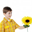 Little boy with a yellow flower — Stock Photo