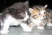 Two little kittens — Stock Photo