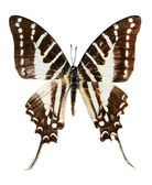 Butterfly, (isolated) — Stock Photo