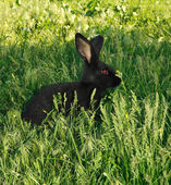 Black amusing rabbit — Stock Photo