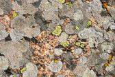 Texture of stone, moss, lichen — Stock Photo