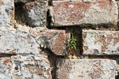 Texture of Brick wall — Stock Photo