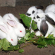 Royalty-Free Stock Photo: Small rabbits eat green leaves