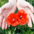 Stock Photo: Poppy in hands
