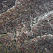 Texture of granite, grey texture - Foto Stock