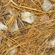 Texture Dry straw — Stock Photo