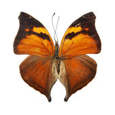 Butterfly on the white background — Stock Photo
