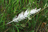 White feather on a green grass — Stock Photo