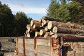 Loading logs of trees in the forest — Stock Photo