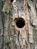 Bird house, bark of tree with a hollow — Stock Photo