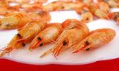 Shrimp on the white plate — Stock Photo