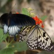 Two butterfly — Stock Photo