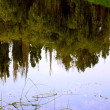 Reflection — Photo #1577896
