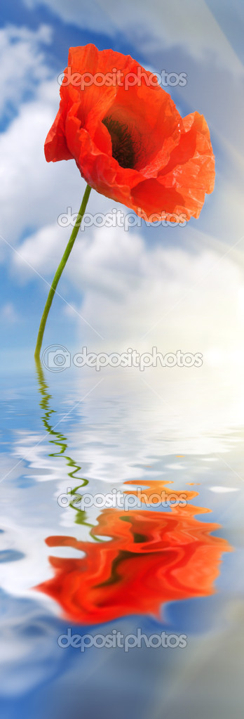 Poppy in water. Nature composition. — Stock Photo #1106026