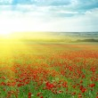 Big poppy meadow — Stock Photo #1114315