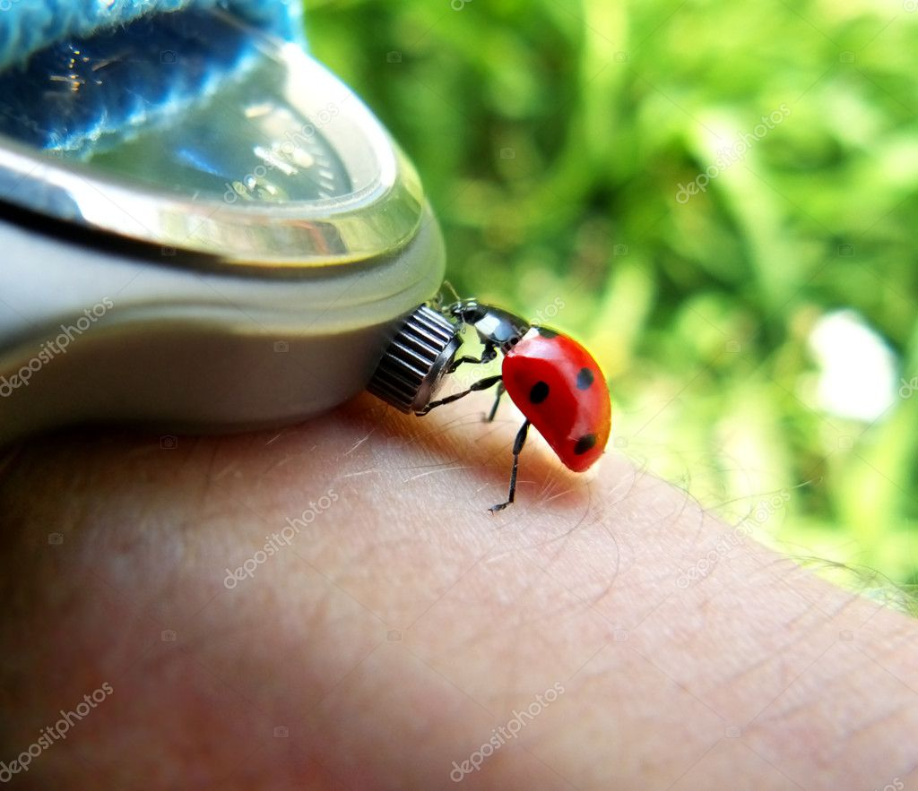 Ladybird tries stop the time.  — Stock Photo #1144168