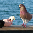 Feeding the dove — Stock Photo