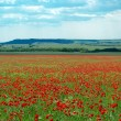 Big poppy meadow — Stock Photo #1455597