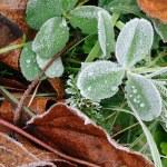 Frosty grass — Stock Photo #1094011