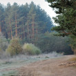 Stock Photo: Autumn mist in forest