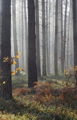 Autumn mist in forest — Stock Photo