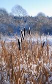 Bir baston kar — Stok fotoğraf