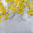 Stock Photo: Yellow leaves of maple