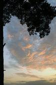 Summer evening sky — Stock Photo