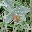 Frosty grass — Stock Photo
