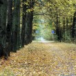 Stock Photo: Bicycle path in the autumn