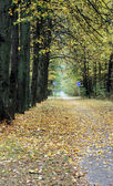 Bicycle path in the autumn — Stock Photo