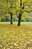 Autumn mist in forest — Stock Photo
