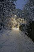 Winter night — Stock Photo