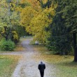 Stock Photo: Autumn solitude