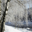 Hoarfrost on birch branches — Stock Photo #1842371