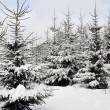 Stock Photo: Winter fantasy in forest
