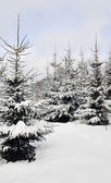 Winter fantasy in forest — Stock Photo